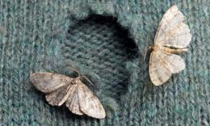 Moths eat knit sweater